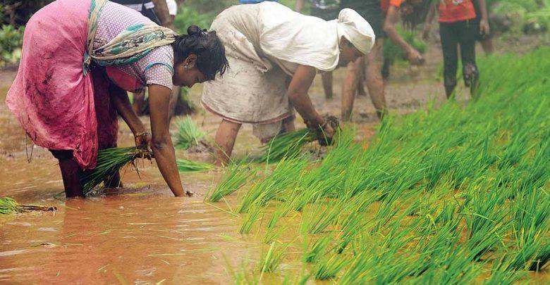 60-في-المائة-من-الزراعة-في-باكستان-تعتمد-على-النساء-،-لكنها-لا-تحصل-على-أجر-رغم-العمل-الشاق