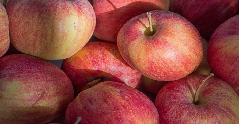 الآن-سيتم-زراعة-التفاح-ليس-فقط-في-كشمير-ولكن-في-جميع-أنحاء-البلاد-،-اعرف-كيف-حدثت-المعجزة