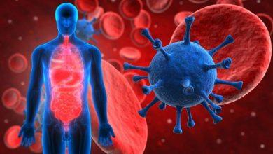 فيروس-كورونا:-هل-الحشرات-تنقذ-البشر؟-مطالبة-الدراسة