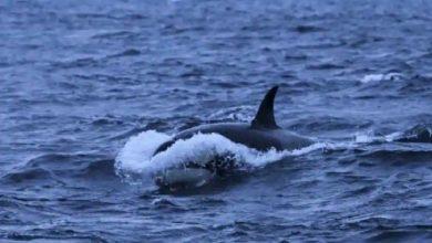 فاجأ-سلوك-الحيتان-على-الساحل-الإسباني-عالم-الأحياء