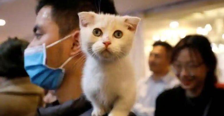 صنعت-هذه-الشركة-لقاح-كورونا-للحيوانات-والقطط-المراد-اختبارها
