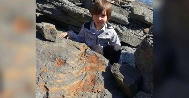 نجاح-كبير-لطفل-يبلغ-من-العمر-7-سنوات-،-اكتشف-عمره-25-مليون-سنة