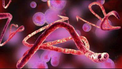 المرض-الغامض-الذي-انتشر-إلى-الصيادين-في-هذا-البلد-الأفريقي-،-كل-ذلك-في-الحجر-الصحي