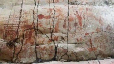 """تم-العثور-على-""""لوحة""""-بطول-8-كيلومترات-في-غابات-الأمازون-،-وصور-لحيوانات-من-هذا-العصر"""