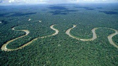غابات-الأمازون-المطيرة:-كشفت-الأبحاث-أن-أكبر-غابة-في-العالم-قد-تنتهي-بحلول-عام-2064