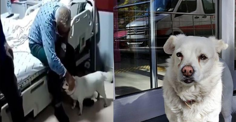 فيديو:-نُقل-المالك-إلى-المستشفى-،-وظل-الكلب-الأليف-يحرس-في-الخارج-لمدة-6-أيام