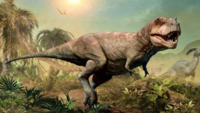 dinosaur-on-moon:-الديناصورات-وصلت-إلى-القمر-قبل-البشر-،-تعرف-كيف-حدث-ذلك