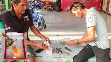 صياد-تايلاند-يحصل-على-لؤلؤة-نادرة-بقيمة-2.5-كرور-روبية-،-رأى-حلمًا-بالحصول-على-هدية-قبل-أيام-قليلة