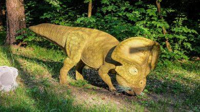 هدب-رقبة-الديناصور:-يستخدم-الديناصور-على-شكل-غنم-لجذب-شريكها-لممارسة-الجنس-مع-رقبة-خاصة