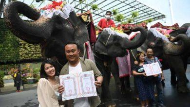 عيد-الحب:-حفل-الزفاف-الجماعي-السنوي-في-تايلاند-مذهل-،-تتم-مناقشة-هذه-الطقوس