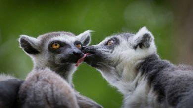 علوم-الحياة:-ليس-فقط-البشر-،-ولكن-أيضًا-في-رباط-الحب-الطويل-للمخلوقات-الأخرى-،-يقضون-الحياة-مع-شريك