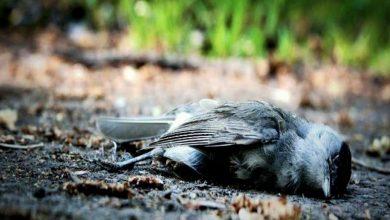 لغز-وادي-جاتينجا:-وادي-غريب!-حيث-تنتحر-الطيور-،-حتى-العلماء-لا-يستطيعون-حل-اللغز