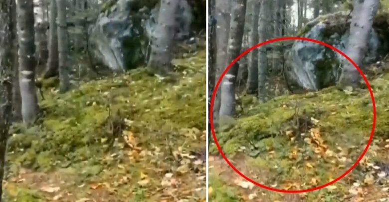 فيديو-تنفس-الغابة:-شاهد-كيف-تنفست-الغابة-فجأة-في-الفيديو!-قال-العلماء-الحقيقة-المروعة