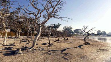 غابة-الأشباح:-الغابة-المسكونة-سريعة-النمو-في-هذه-الولاية-،-وتحتل-21-ألف-فدان-من-الأرض-؛-صدم-العالم