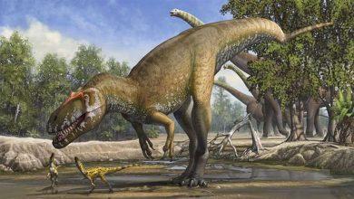 ديناصور:-العلماء-قاموا-بإفشاءات-كبيرة!-منذ-ملايين-السنين-،-نهاية-الديناصورات-العملاقة-على-الأرض