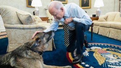 وفاة-بطل-الكلب-الرئيس-الأمريكي-جو-بايدن-،-كان-جزءًا-من-الحملة-الانتخابية