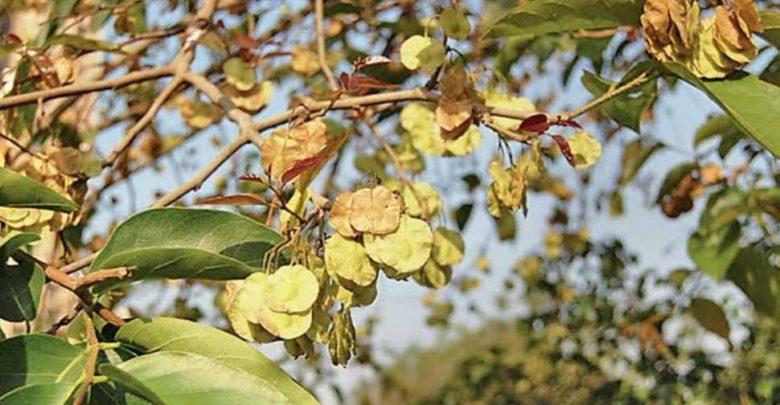 يمكن-للأشجار-أيضًا-أن-تنشر-الفيروس-التاجي-في-وقت-التلقيح-،-مما-يثير-الصدمة-في-البحث-من-جامعة-نيقوسيا