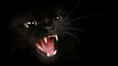 تايلاند:-اختفى-القط-الأليف-فجأة-من-المنزل-،-ثم-تطير-الحواس-بعيدًا-لعلم-ما-حدث