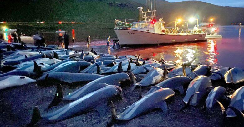 تم-قتل-1500-من-الدلافين-هنا-باسم-التقاليد-،-وأصبح-لون-البحر-أحمر-بالدم