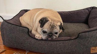 omg:-هذا-الكلب-يتنبأ-بطريقة-خاصة-،-ويخبر-كيف-سيذهب-يومك